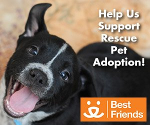 Cleaning For The Paws – Chem-Dry Supports Rescue Pet Adoption