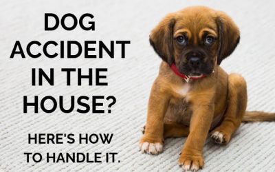 Dog Accident in the House? Here's How to Handle It.