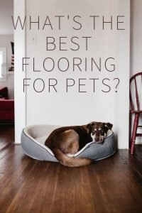 What's the Best Flooring for Pets?