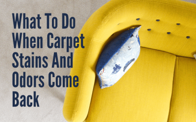What To Do When Carpet Stains And Odors Come Back